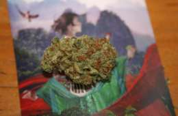 A Respect My Region Review of the Falcanna Diesel Thai Strain