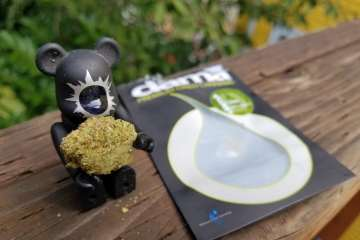 A Real Review of The Cinex Strain From Dama Cannabis