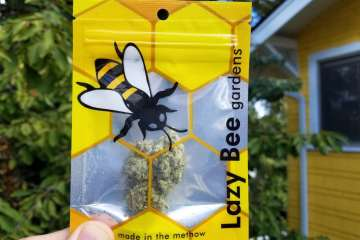 A Real Review of The Wifi OG Strain From Lazy Bee Gardens