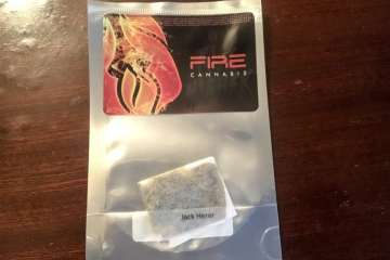 A Review of the Jack Herer Strain from Viva Cannabis Ft. Diego Pellicer