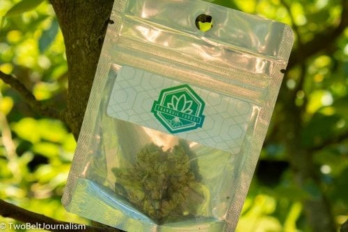 Monkey Glue Strain Review (Prod  By The Tranquil Forest)
