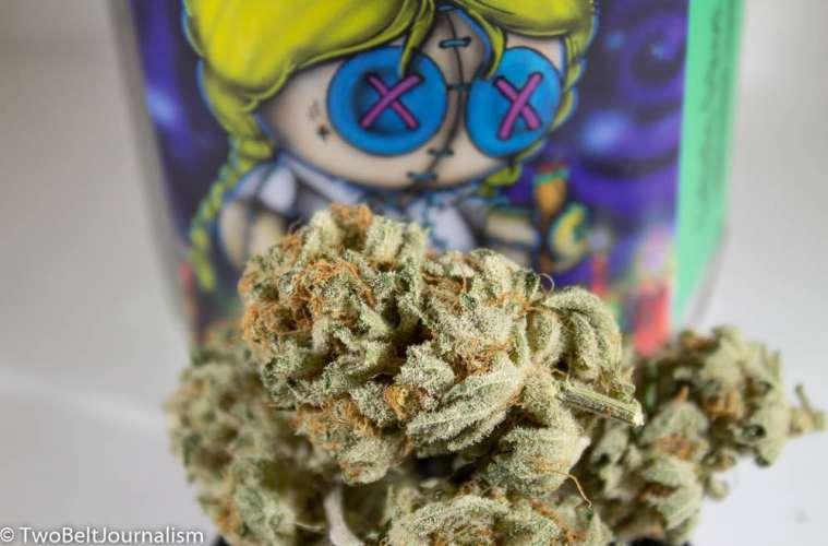 Sky Standard Gardens Cannabis Review (Feat. Catholic School Girl Strain)