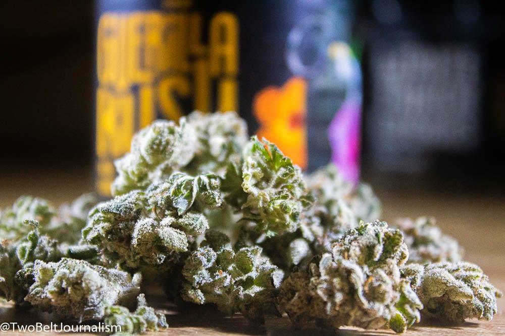 Guerilla Kush Cannabis Strain Review (Prod  Funky Monkey)