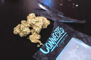 Lemon Fuel Strain Review (Prod. Connected Cannabis)