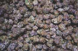 West Coast Weed Tour - Spokane Recap (Ft. Lilac City Gardens, Legendary Labs, + More)