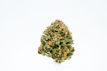 The Musky Flodu Strain From ZoZ Cannabis Crosses The White With Chemdawg
