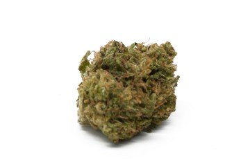 The Lemon Tree Strain Is A Burst of Sweet Citrus With An Electric Euphoria