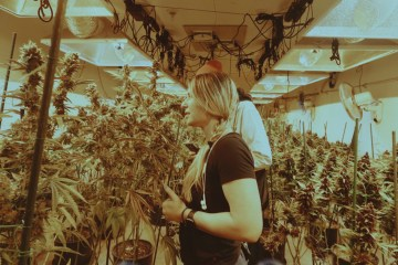 HID Vs. LED Lighting Systems: Illuminating the Simple Pros and Cons For Curious Cannabis Cultivators