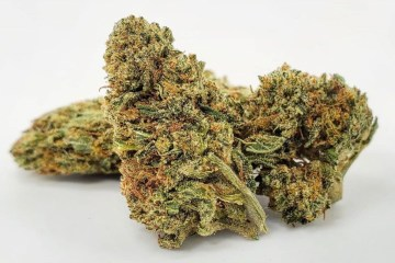Uplift Your Mind And Tickle Your Taste Buds With The Ambrosial Spice Of The Lambs Bread Strain