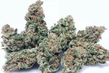 Ruby Slippers Strain: Reviewing A Super-Charged Sativa With Crisp Berry Flavors And Energetic Effects