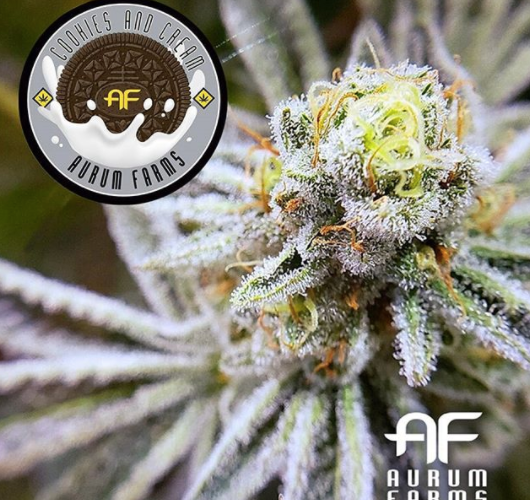 The Cookies And Cream Flower Review Feat. Aurum Farms