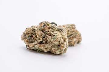 Buddy Buddy Indoor Natural GOT nug on a white background
