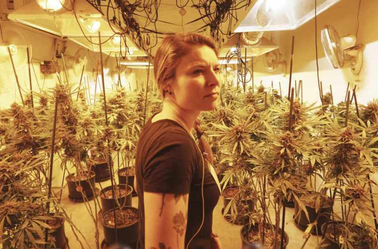 Insight Cannabis Consulting Empowers Entrepreneurs To Build The Canna-Company They've Always Wanted To Operate