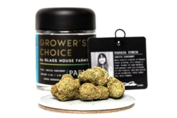 Papaya Punch Strain Review Featuring Glass House Farms Grower's Choice Cannabis In California