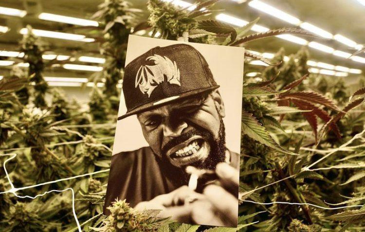 Method Man Cannabis TICAL