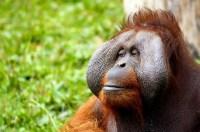 monkey-428032_1280