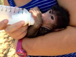 Risultati immagini per volunteer baboon orphan