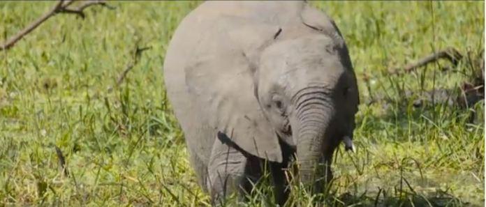 Elephant at Lake Malawi National Park
