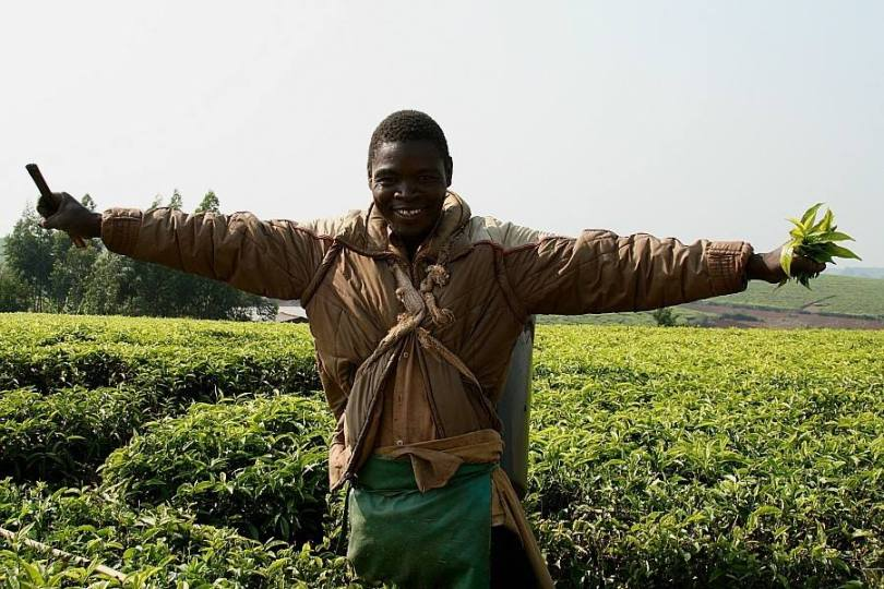 Tea estates worker in Mulanje