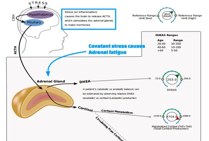 cortisol levels