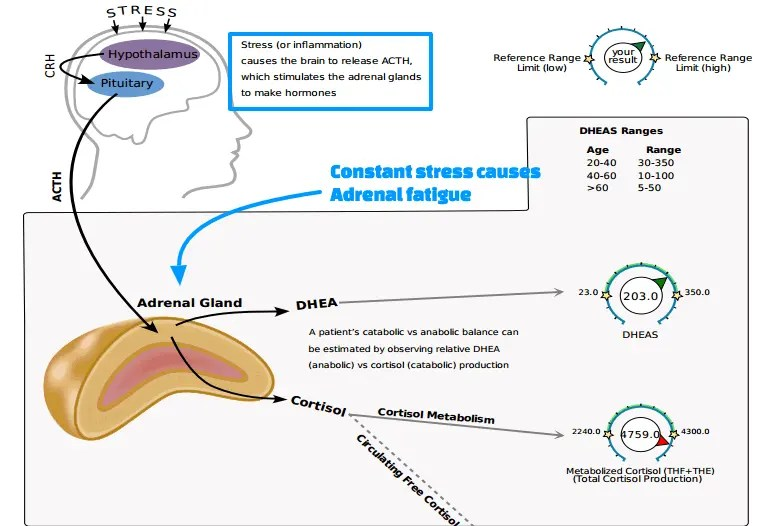 Constant stress causes adrenal fatigue