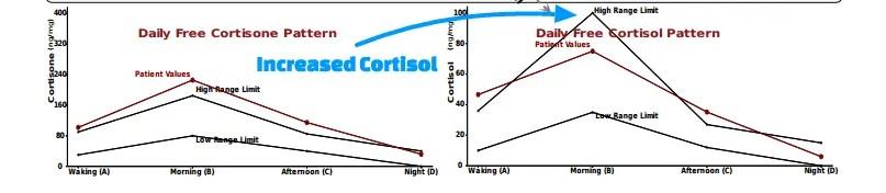 cortisol weight gain