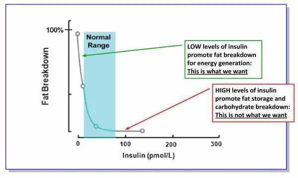 Burning fat in the presence of insulin