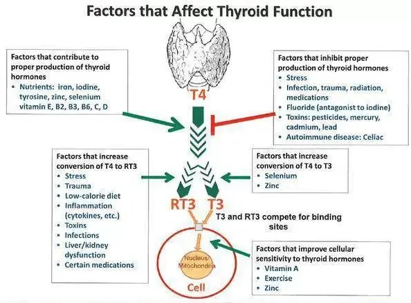 Thyroid conversion with leptin resistance