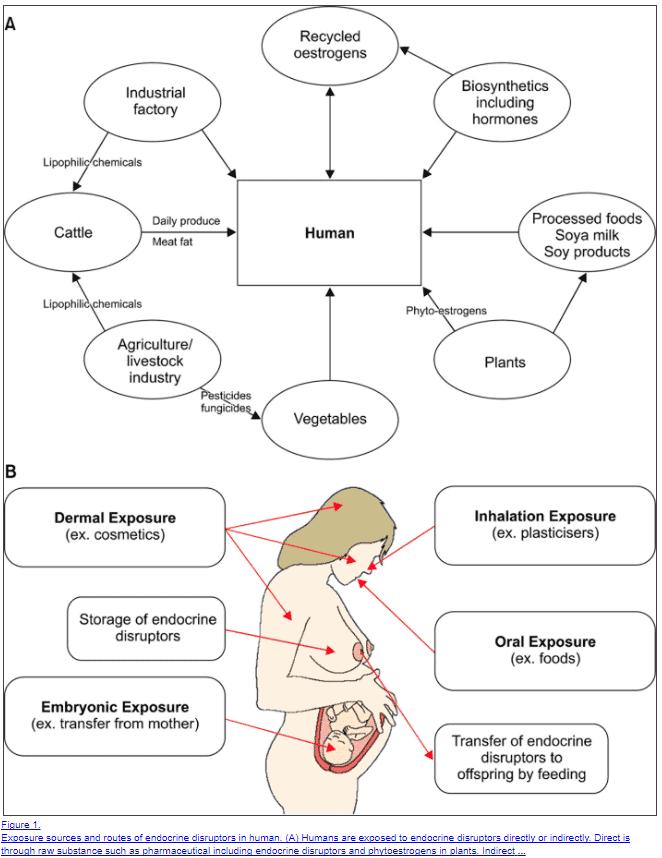 endocrine low progesterone symptoms