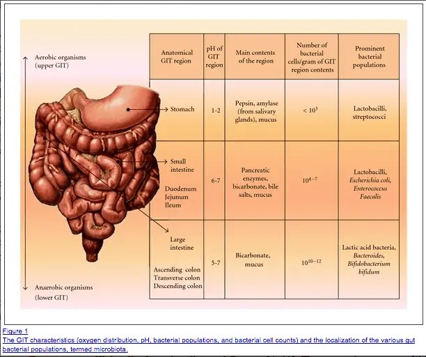 gut microbiome and bacterial species