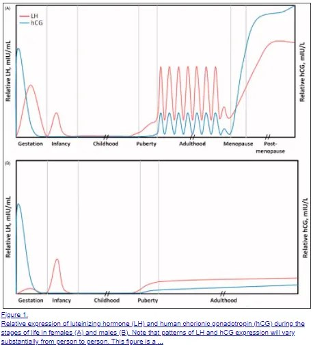 normal HCG levels in both men and women over time