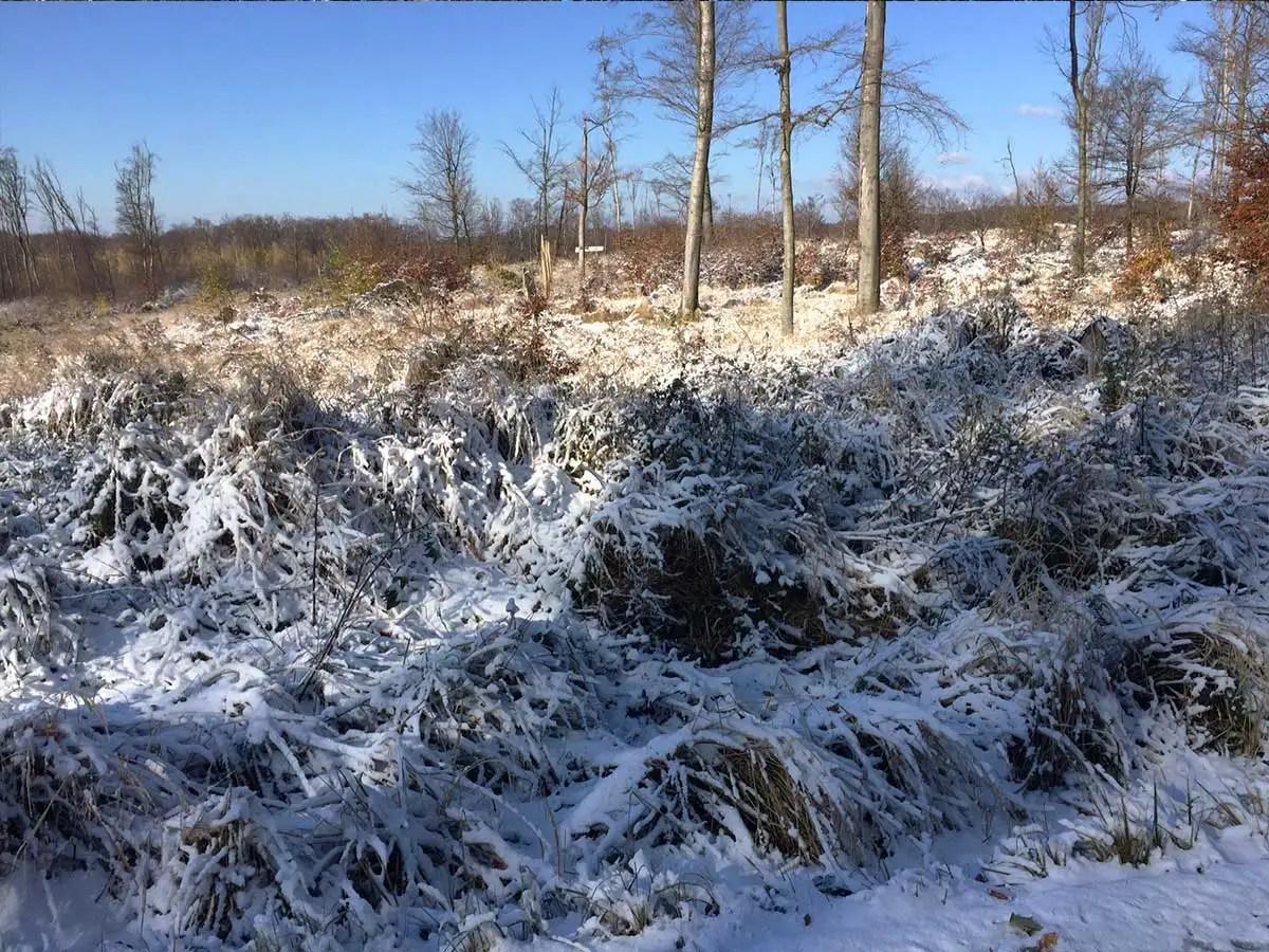 Srdečné pozdravy zo zimných Malých Karpát