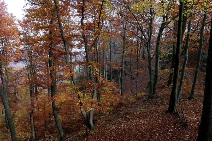 Súľovské lesné kreácie