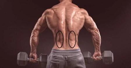 Vzpriamovače chrbtice (Model Peter Ertl)