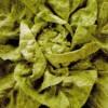 Salată cu porumb dulce si masline
