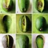 Pasta de avocado I