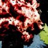 Pilaf cu sfeclă roşie şi prune uscate