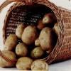 Salata de cartofi noi cu smântână