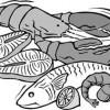 Plachie de crap sau de orice peşte