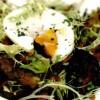 Salata_pentru_micul_dejun
