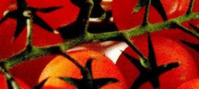 Rosii in saramura