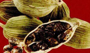 Cardamomul