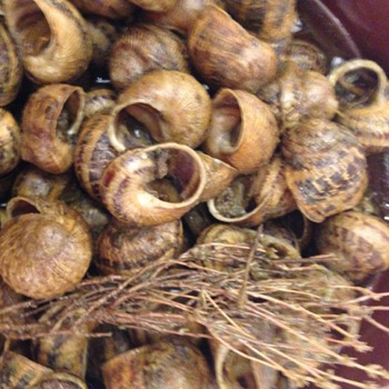 Ca L'Estevet snails (salt, pepper and thyme)