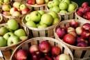 Seasonal Eats: All About Apples