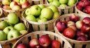 Seasonal Eats: Apples