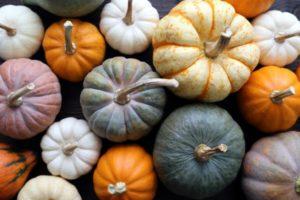 pumpkin_variety-e1444771130816