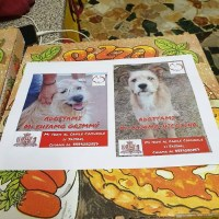 Una pizza... a 4 zampe: le foto dei cani da adottare sui cartoni a domicilio