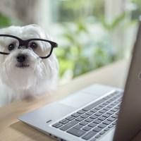 Doggami: sulla scia di Tinder, nasce l'app di incontri per cani