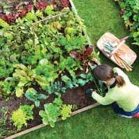 I migliori consigli per la cura dell'orto in ottobre