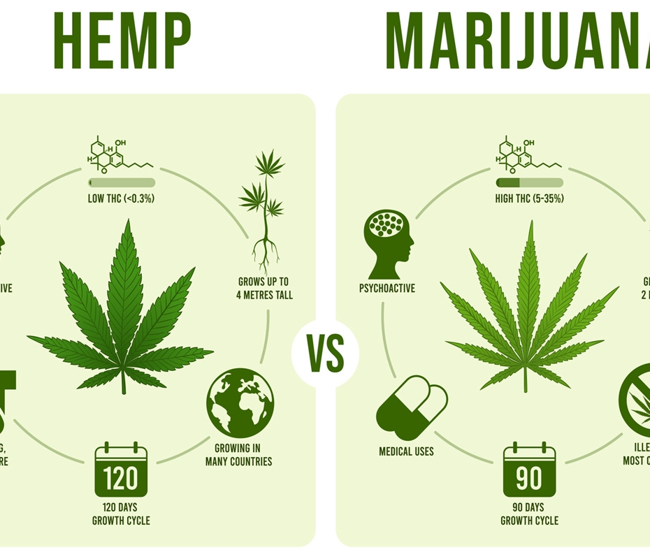 What is Hemp? How is Hemp Different from Marijuana?